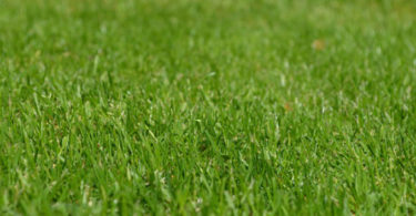 Mes conseils pour avoir une pelouse magnifique